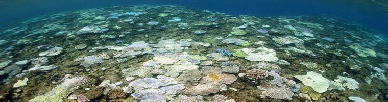 沖縄のサンゴの白化情報