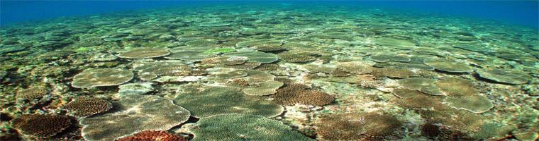 沖縄のサンゴの保全・モニタリング記録